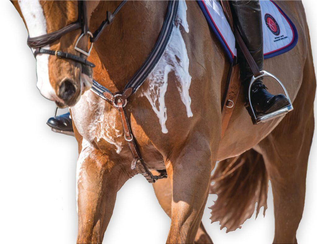 horse electrolytes
