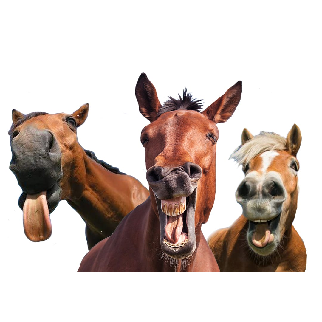 IS YOUR HORSE CALM, ALERT & RESPONSIVE?