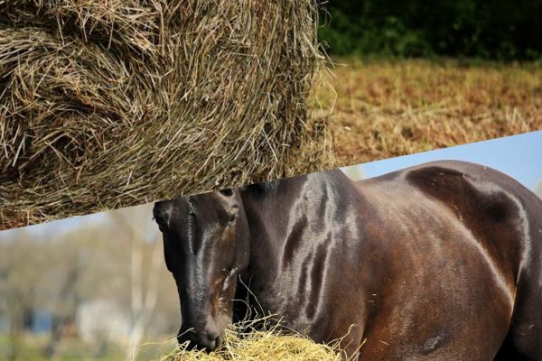 best type of Hay for as horse