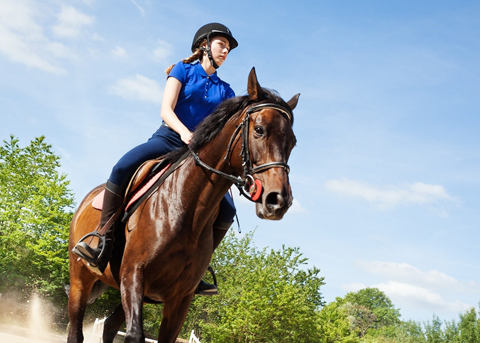 nutrition for horses