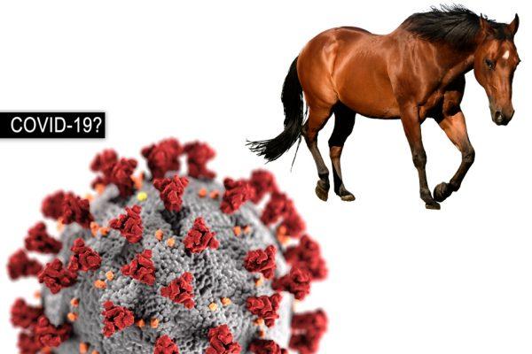 Can Horses Get Coronavirus COVID-19