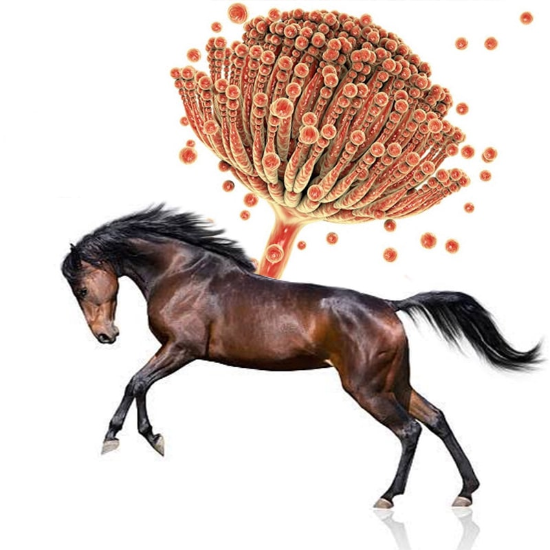 Are Myctoxins Harmful to Horses?
