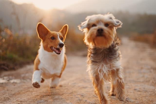 dog joint health