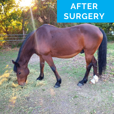 Francesca's horse after a colic surgery