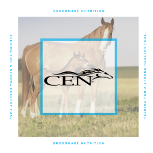 Episode 30 | BROODMARE NUTRITION - Feeding For A Strong Healthy Foal