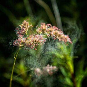 Grass Pollen Allergy in Dogs - CEN Dog Nutrition