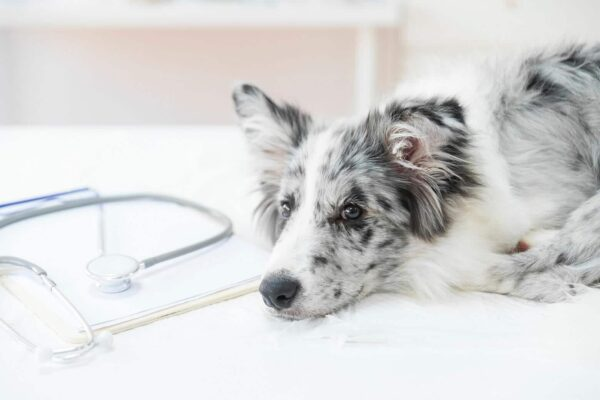 Worms In Dogs CEN Dog Nutrition