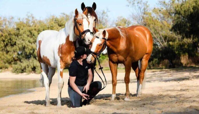 CEN-Horse-Nutrition-Homepage-Banner
