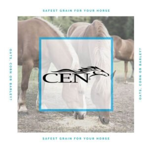 Episode 31 SAFEST GRAIN FOR YOUR HORSE - Oats, Corn Or Barley