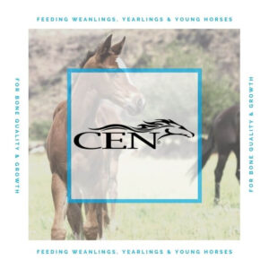 Episode 33 FEEDING WEANLINGS, YEARLINGS & YOUNG HORSES - For Bone Quality & Growth
